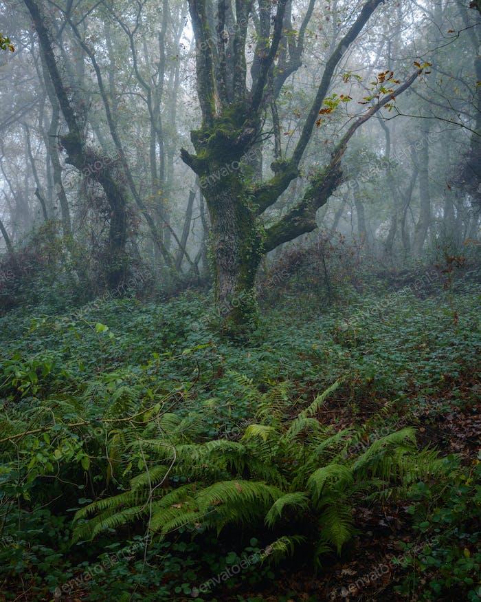 Moody atmosphere in an oak forest