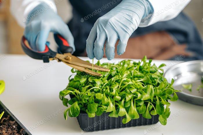Female gardener caring for her plants indoors