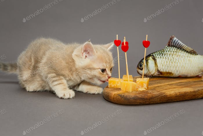 Kitty gourmet and cheese