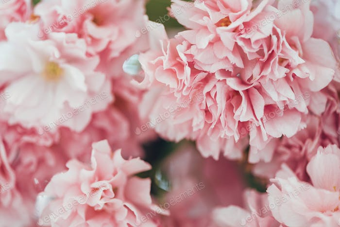 full frame image of pink sakura flowers background