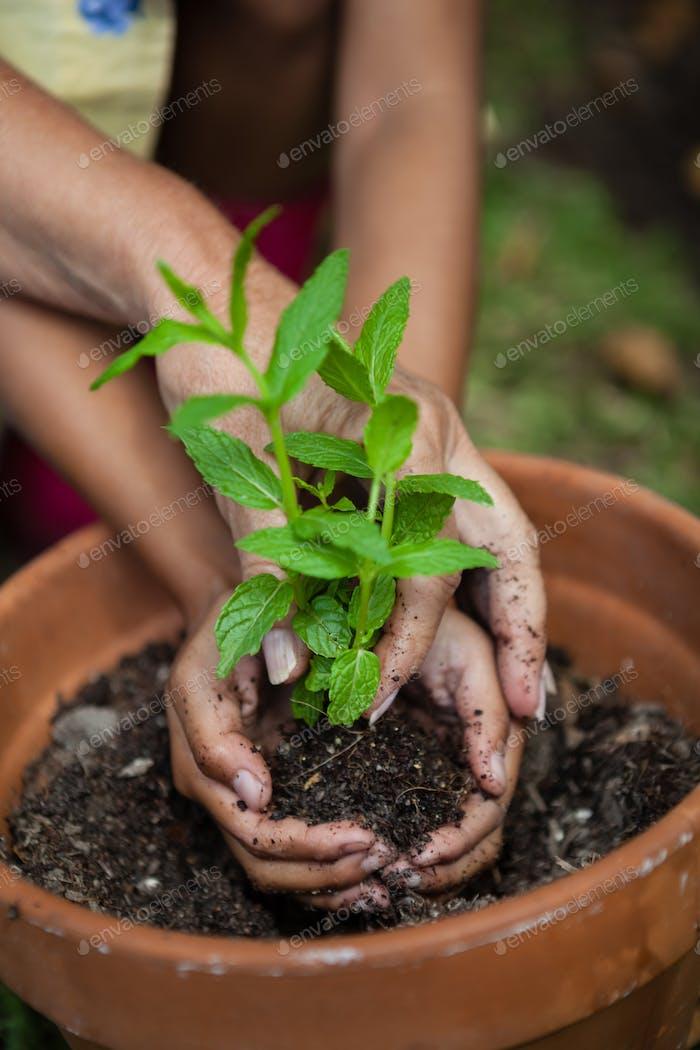 Gekürzte Hände von Mädchen und Großmutter Pflanzung Sämling in Topf