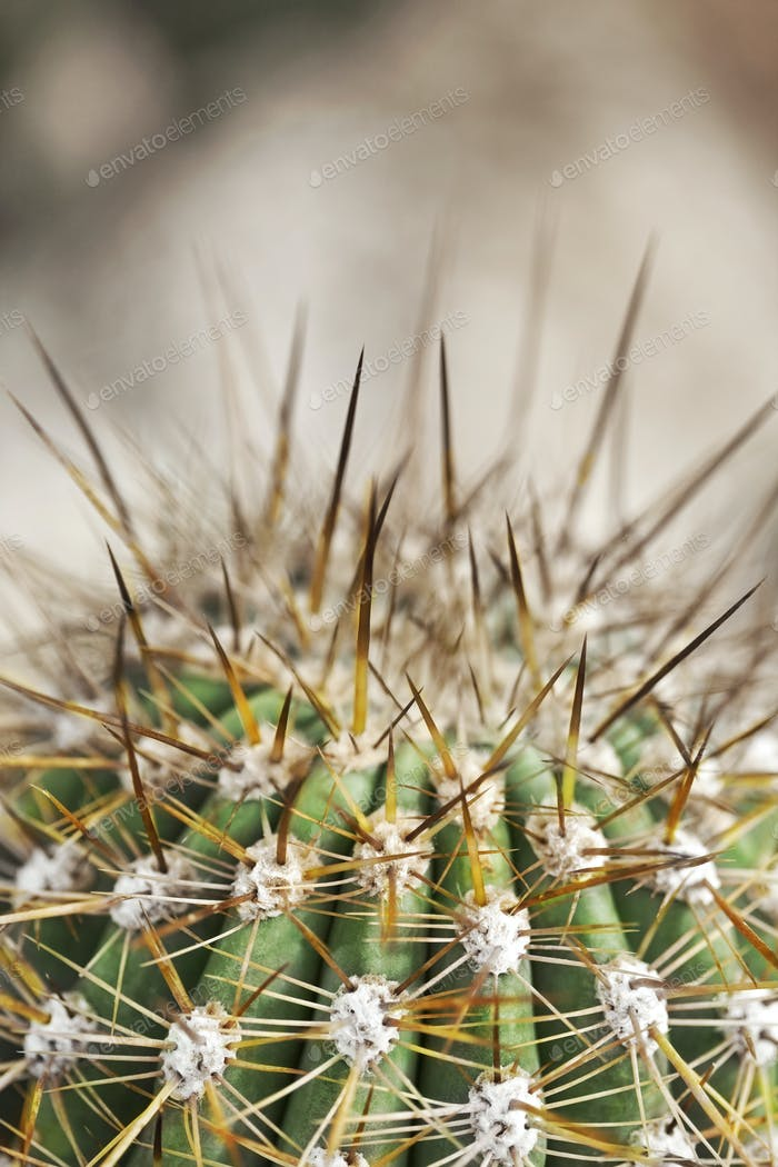 Macro photography of a big cactus