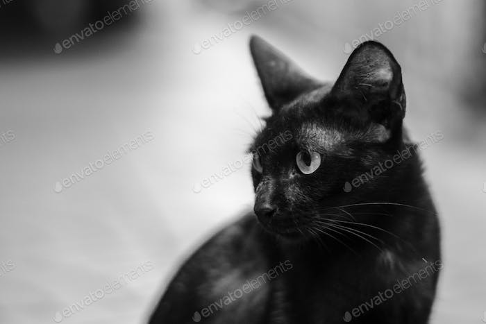 Closeup of black kitty sitting alone