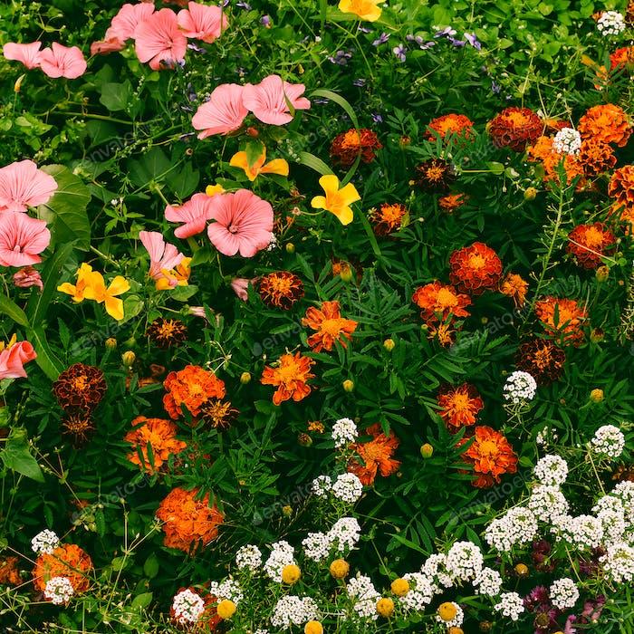 Flowers background Minimal style