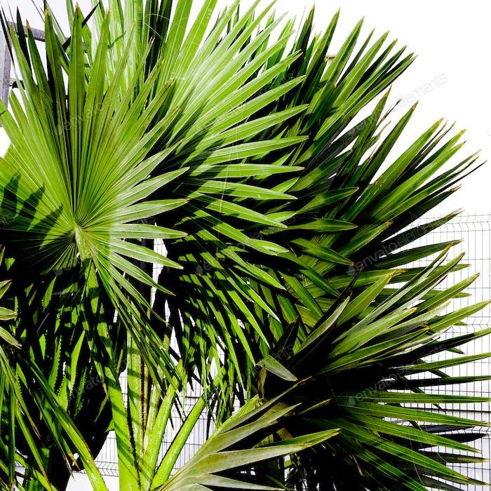 Palm tree Tropical Urban design minimal