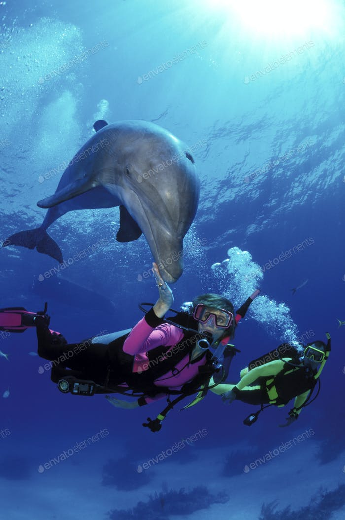 Scuba divers swim with dolphin in the open ocean during the Dolphin Experience at UNEXSO