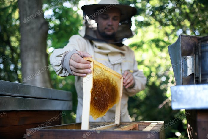 Man beekeeper holding honeycomb frame in apiary