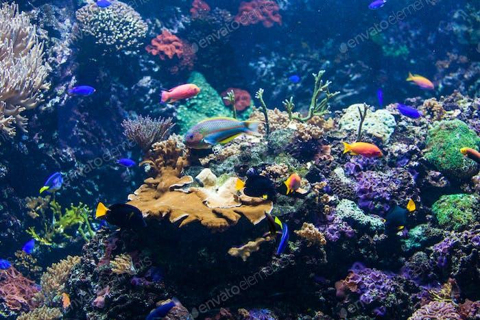 Unterwasserszene