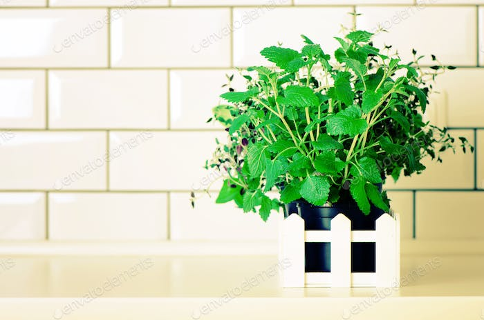 Mint, thyme, basil, parsley - aromatic organic herbs on white kitchen table, brick tile background