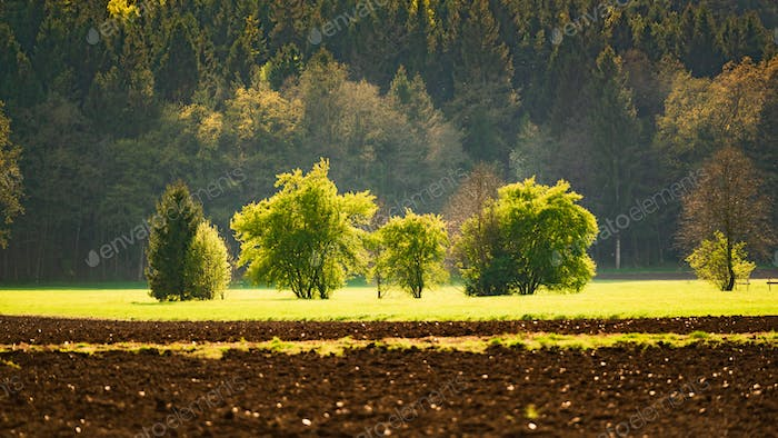 Agricultural field and forest landscape in Austria. Green trees on beginning of spring