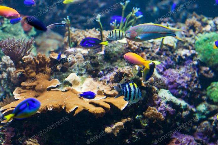 underwater background.  Underwater photo