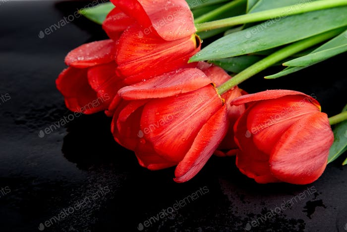 Red tulips on black background. Empty space