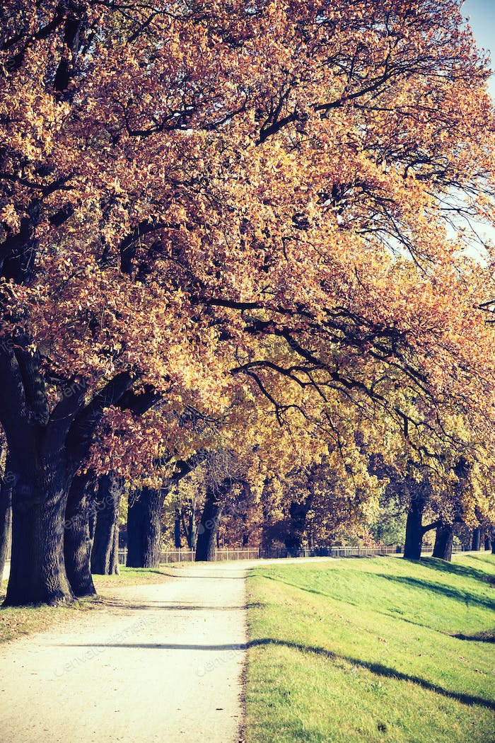 Autumn vintage park alley with trees