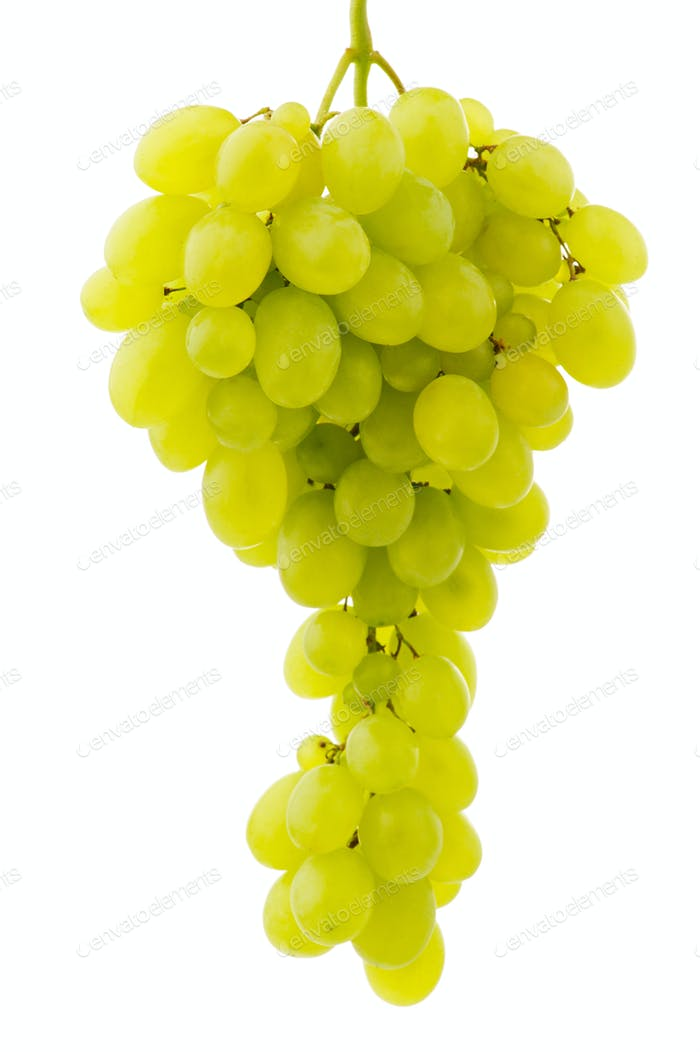 Single bunch of grapes