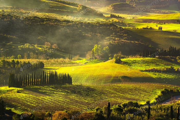 Maremma countryside, sunrise foggy landscape, vineyards and tree
