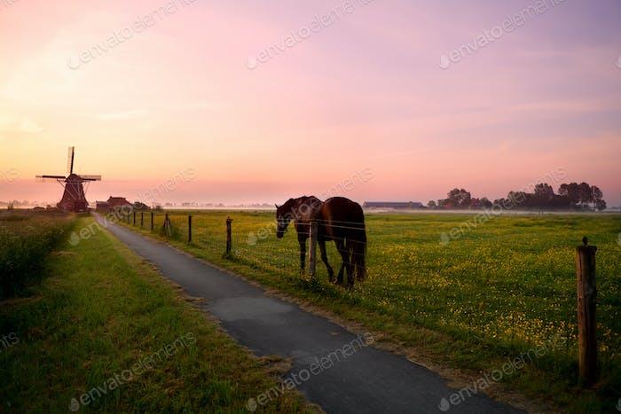 Pferd auf Weide und Windmühle bei Sonnenaufgang