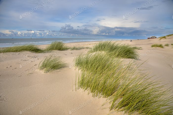Young Dunes by the ocean