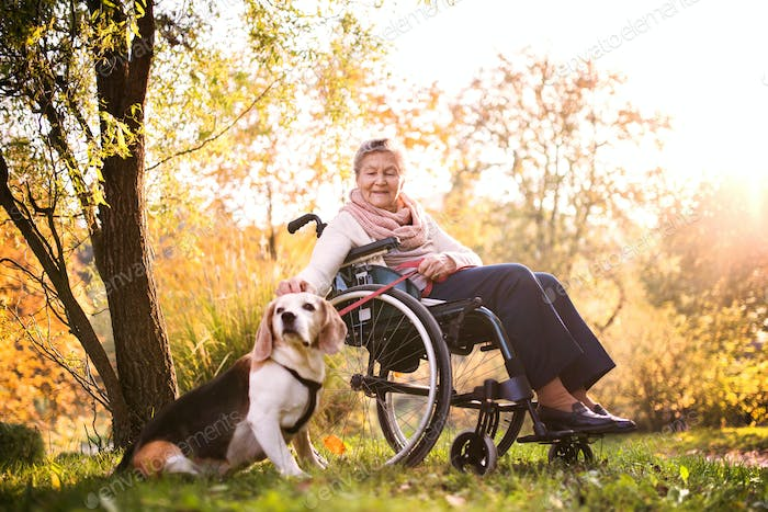 An elderly woman in wheelchair with dog in autumn nature.