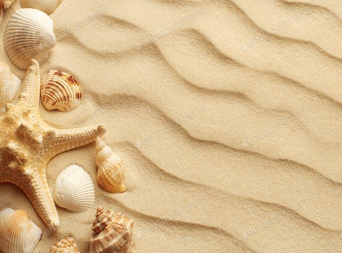 Sand dunes with seashells