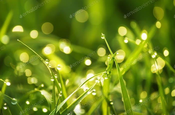 green grass and bokeh