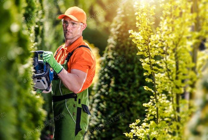 Thuja Green Wall Shaping