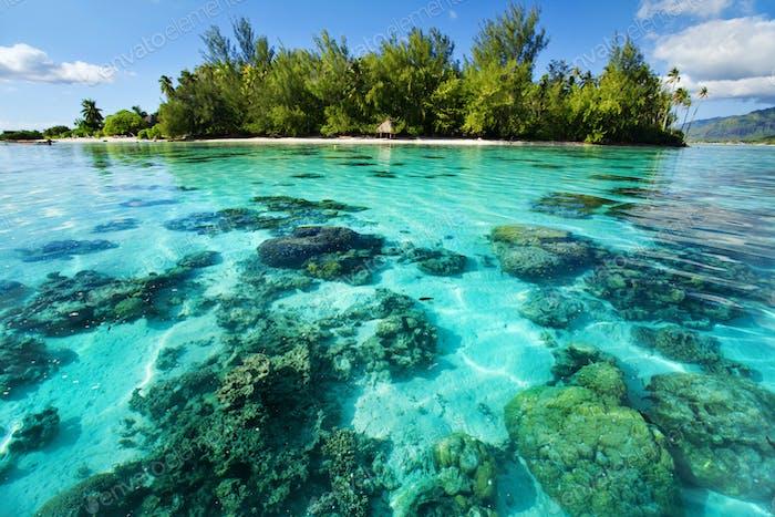 Unterwasserkorallenriff neben tropischer Insel