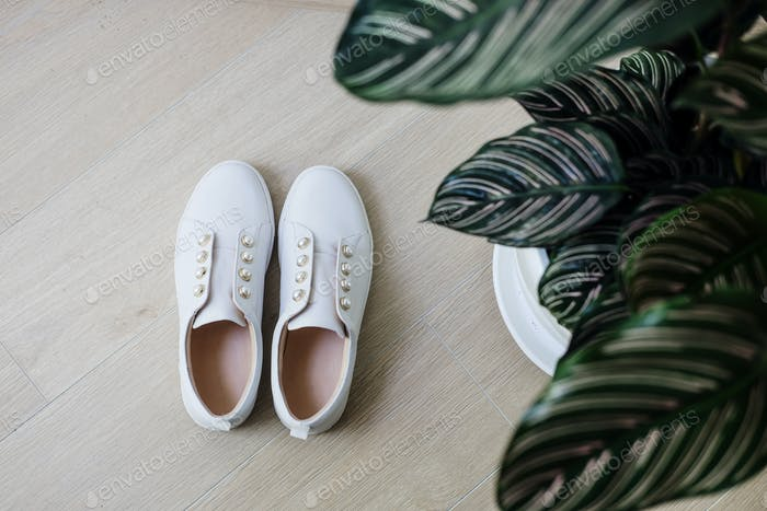 White sneackers shoes and green plant minimal
