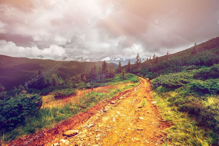 Mountain path in Carpathians, Ukraine.