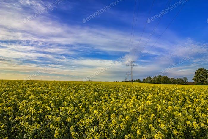Stromleitungen auf dem Feld.