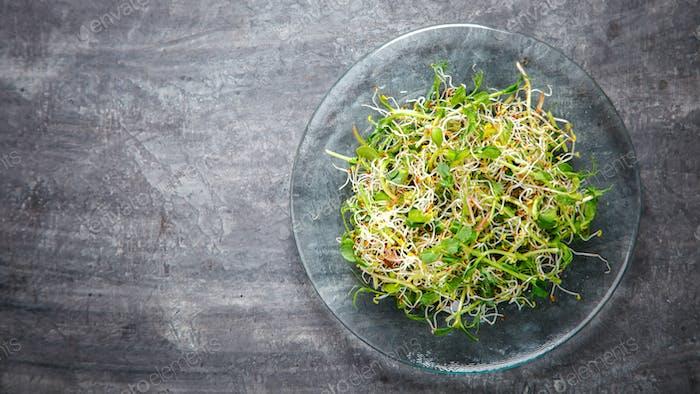 Raw Sprouts Microgreens.Frischer grüner Salat.Konzept der gesunden Ernährung.