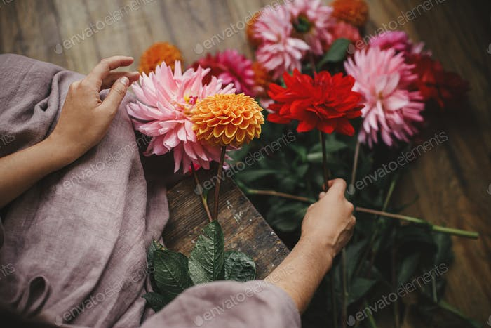 Woman holding dahlias flowers and sitting on wooden rustic bench, view above. Atmospheric autumn