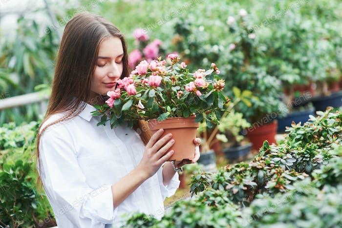 Fühle Freude. Hübsches Mädchen hält den Topf und schnüffelt die Blumen im Gewächshaus