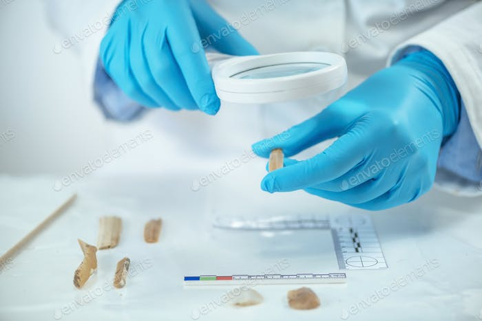 Archaeologist Using Lithic Analyzing Technique Laboratory