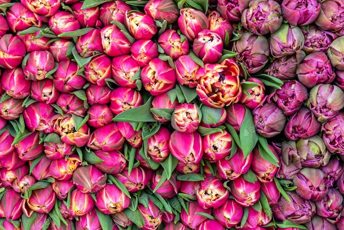 Bouquet of red tulips for sale
