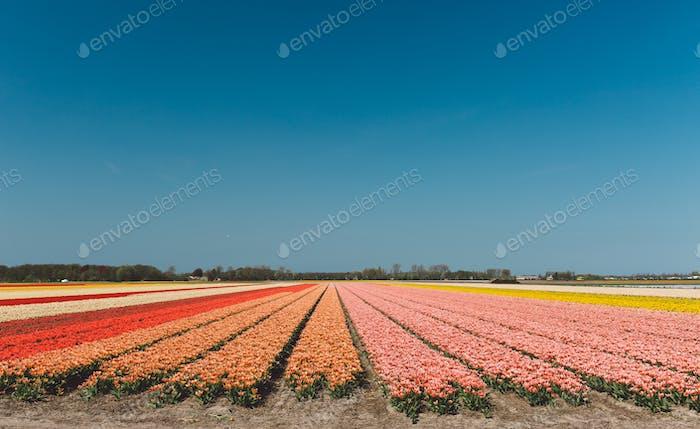Frühling in Niederlande