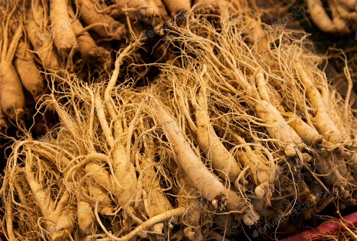 Fresh ginseng for sell