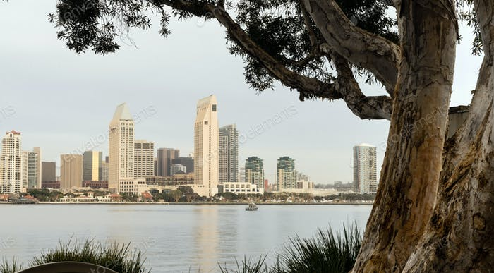 Old Tree Peeling Bark San Diego Downtown City Skyline