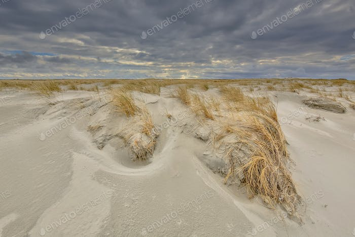 Young Dunes being formed