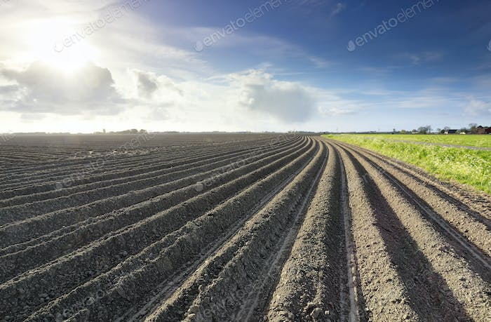 plowed potato field in spring in sunshine