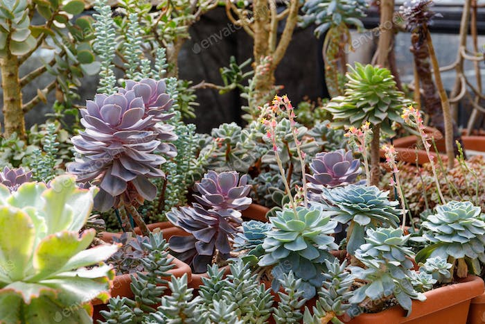 Different kinds of succulents in a greenhouse.
