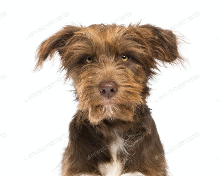 Close-up of a Crossbreed, 5 months old, looking at camera against white background