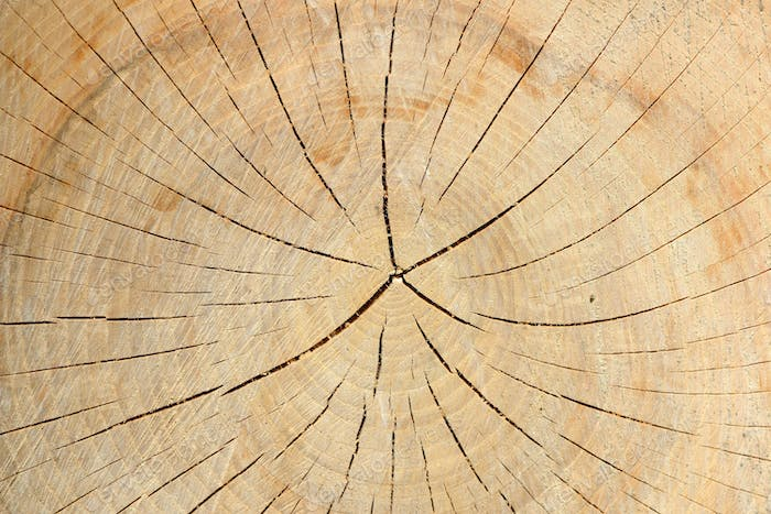 Wood texture of tree stump with cracks in brown tone for backgro