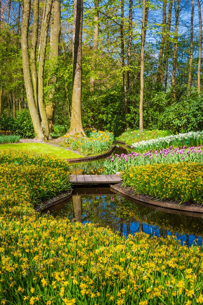 Blumen Garten oder Feld im Frühjahr. Frühlingsgarten