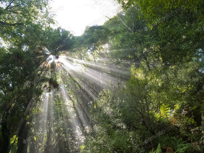 Sunlight rays beam through dense tropical jungle
