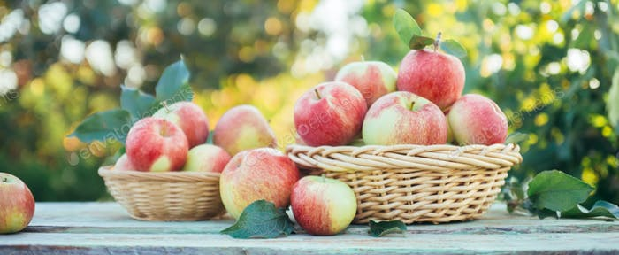 Organic apples in a baskets