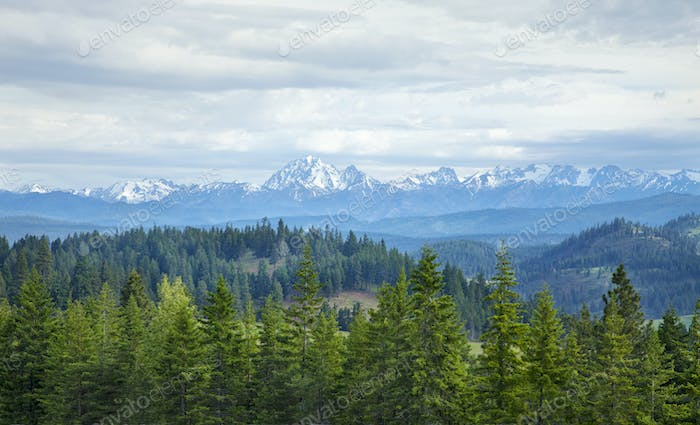 Mountains and Pines in Washington State
