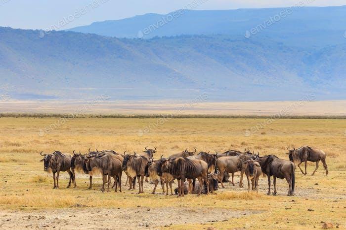 Ngorongoro-232