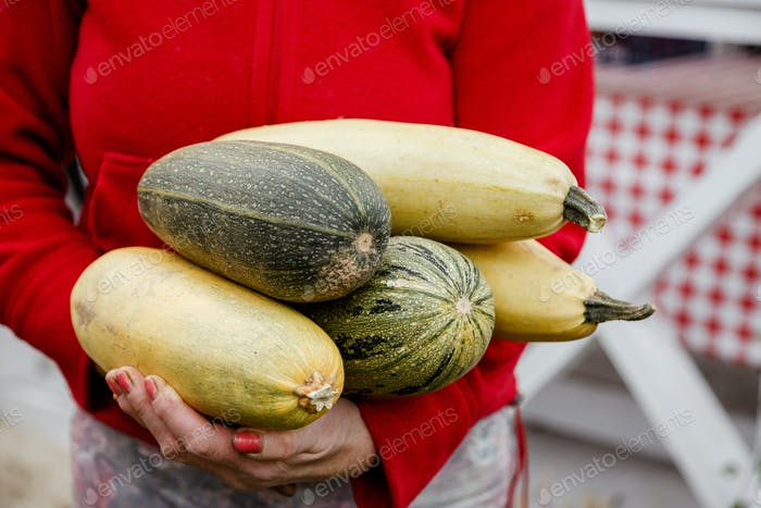 Zucchini and yellow squash in old woman farmer