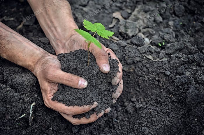 Hands holding young plant with soil