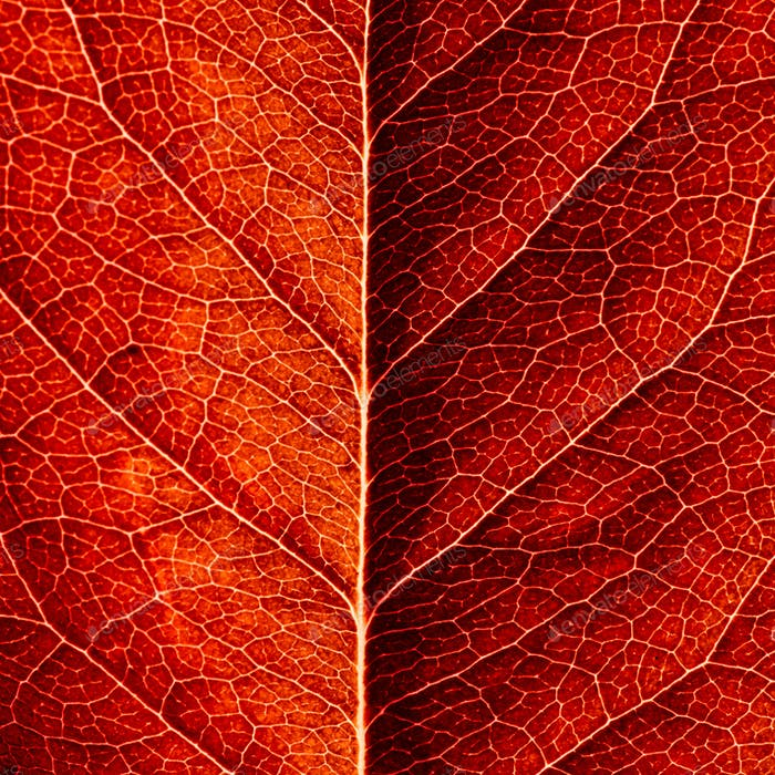 series of leaf textures in fresh colors